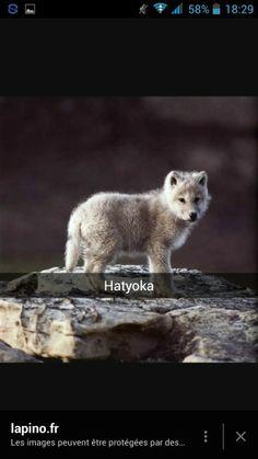 Hatyoka