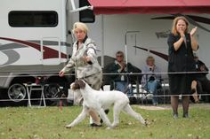 As the Wheels Turn – Handling Tips FAQ — moving with your dog   Best In Show Daily   2015