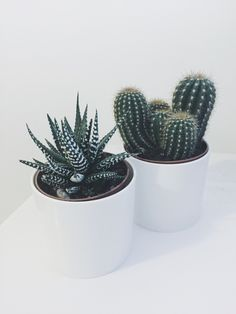 Cactus ( the perfect plant for city dwellers) .