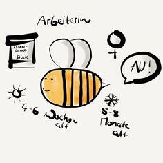 Ein Mini-Steckbrief über die Arbeiterbiene.