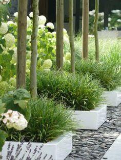 grasplanten in witte strakke potten