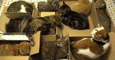 cats-slumber-party
