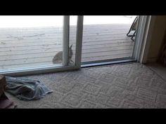 Video - Wild rabbit meets house rabbit! - May 21, 2012