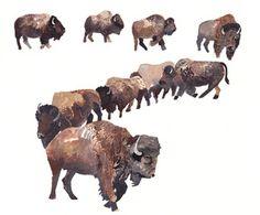 Bison Herd- watercolour art by Michelle Morin