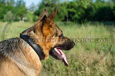 Klassisches Schäferhund Halsband
