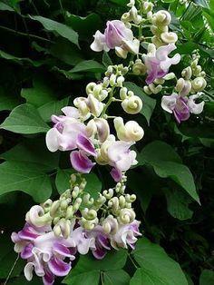 .: Çiçek Çeşitleri 2