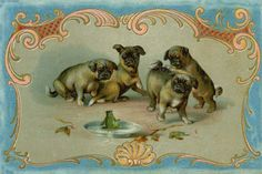 Pug puppies and frog