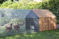 Chicken coop urban - DAILY NEEDS - Cassecroute