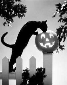 1970s Black Cat and Jack-O'-Lantern on Fence