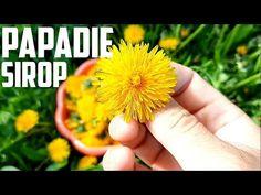 Sirop de păpădie Cum se prepara cel mai puternic remediu naturist - YouTube Dandelion, Flowers, Youtube, Diet, Syrup, Canning, Plant, Health, Dandelions