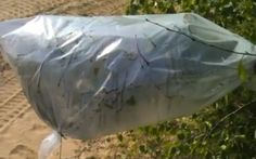 How To Use Transpiration Bags To Gather Water In A Survival Situation - Preparing for shtf