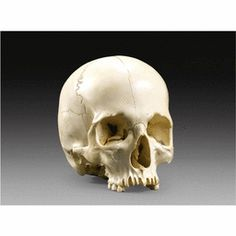 Upper Rhine,dated 1754 a large ivory skull