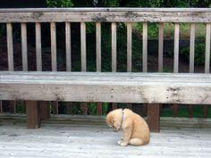 Donnez lui un câlin  à ce pauvre petit chien