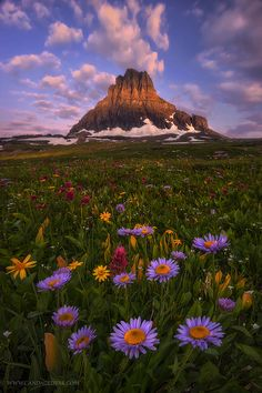 Tips for Stunning Wildflower Photos