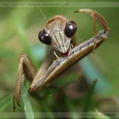 Praying Mantis is my name...Death is my game!!!