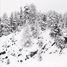 """@silvanozeiter's photo: """"#white #trees #beautiful"""""""