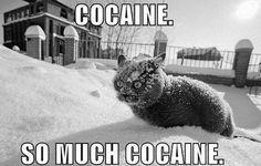 cocain cat :D