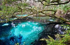 Juniper Springs, Ocala FL - From Interstate 75 at SR 40 in Ocala, drive east through Ocala and Silver Springs to reach the Ocala National Forest. It's about 28 miles from I-75 to the recreation area entrance road on the left. This central Florida gem is located at the Ocala National Forest, http://www.fs.usda.gov/recarea/ocala/recarea/?recid=34064