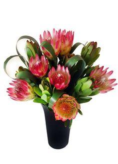 Resultado de imagem para flower arrangements with proteas Flower Arrangements, Gift Delivery, Flowers, Plants, Gifts, Cape, Mantle, Floral Arrangements, Presents