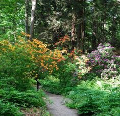 New England Wild Flower Society's Garden in the Woods showcases native New England plants. Open Tuesday through Sunday: 9 a.m. - 5 p.m. Closed Mondays except for holidays.   Through July 4, Garden in the Woods will be open Thursday evenings until 8 p.m.