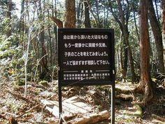 Misterios de Intenet...: El bosque de Aokigahara