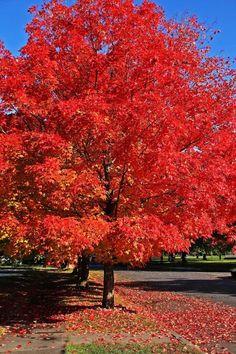 Spokane Washington, Country Roads, City, Beautiful, Cities