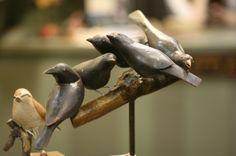 50 Little Birds  A Murder of Crows