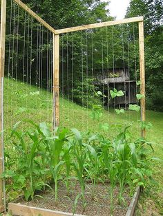 Ewa in the Garden: 14 ideas for bean poles - Inspirational Monday For our green beans!