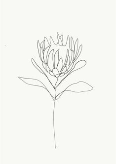 One single line is used to make a delicate flower. Credit: Emma Ryan Protea single line drawing Line Drawing Tattoos, Drawing Artwork, Drawings, Tattoo Drawings, Single Line Drawing, Art, Flower Line Drawings, Botanical Line Drawing, Prints