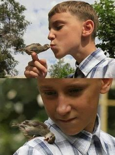 """Esse garoto encontrou um passarinho abandonado e machucado perto da casa da sua vó. Ele pegou o pequeno pássaro o alimentou e cuidou dele até que ficasse saudável. Depois que o passarinho já estava bem, o garoto tentou liberta-lo, mas o pássaro chamado """"Abi"""" decidiu ficar com o garoto ao invés de ir embora. Agora o garoto e o pássaro são inseparáveis. Créditos: reddit #ELF Elves Barbosa CDC Fatos Desconhecidos"""