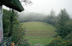 Santa Cruz Mountains vineyard.