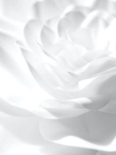 White Flower by Jo Lynn Alcorn