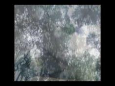 νικολέττα Αναστασίου-ο σπόρος που ήθελε να γίνει δάσος Preschool Music, Youtube, Outdoor, Outdoors, Outdoor Games, The Great Outdoors, Youtubers, Youtube Movies