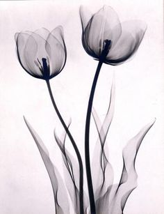 Joseph Bellows Gallery - Dr. Dain L. Tasker - Images