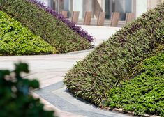 tradescantia mounds in a corporate plaza