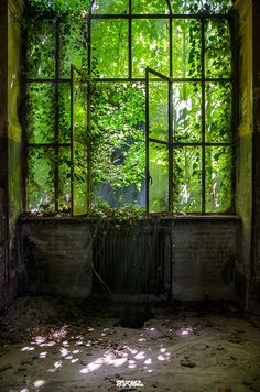 M di R-35 Dark Green Aesthetic, Nature Aesthetic, Slytherin Aesthetic, Fantasy Places, Fantasy Landscape, Abandoned Places, Belle Photo, Aesthetic Pictures, Mother Nature