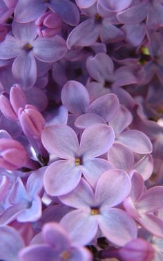 The scent of Lilacs. I happen to have a Lilac tree right outside my bedroom window. The smell coming in the window on a windy night is heavenly.