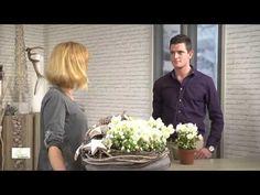 Haltbare Blütenpracht der Christrose in der Weihnachtsfloristik - YouTube