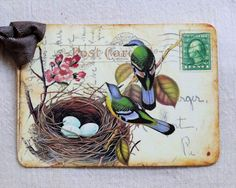 Birds With Eggs In Nest Postcard Gift Tag
