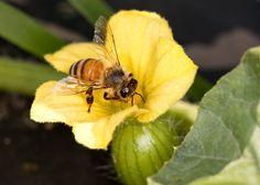 Maryland Pollinator Protection Plan