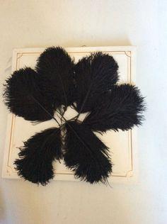 Le chouchou de ma boutique https://www.etsy.com/fr/listing/464642142/plumes-d-autruches-anciennes-noires