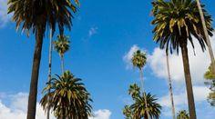 Beverly Hills: dicas do Concierge