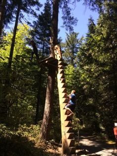 Images of WildPlay Element Parks Nanaimo, Nanaimo - Attraction Pictures - TripAdvisor