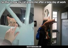 Funny Animal Pictures Of The Day - 25 Images