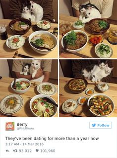 The 27 Funniest Tweets About Cats in 2016   BlazePress
