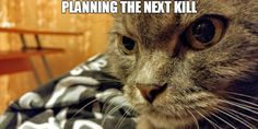 How cats think | 4Birds.net