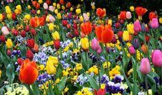 Cochabamba es declarada Capital de las Flores - Camara de Senadores