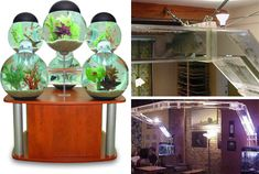 Interconnected aquariums.  Wow....