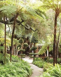 Geometric topiaries near the fern garden anchor airy tree ferns | Lotusland