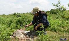 Algae fossil in India may be world's…